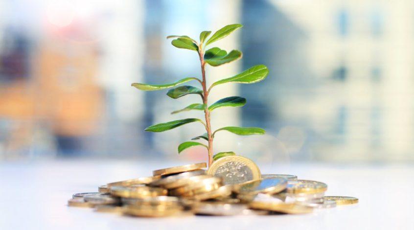 Grön gren som växer från investering och pengar