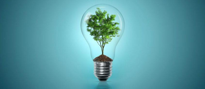 Hållbar glödlampa med grönt träd